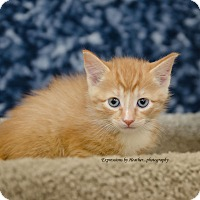 Adopt A Pet :: James - Marlton, NJ