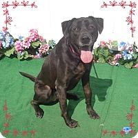 Adopt A Pet :: TRINITY - Marietta, GA