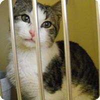 Adopt A Pet :: Murphy (RE) - Trenton, NJ