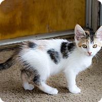 Adopt A Pet :: Emma - Battle Creek, MI