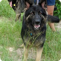 Adopt A Pet :: Mercy - Citrus Springs, FL