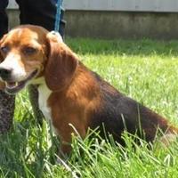 Adopt A Pet :: Marion** HW (++) - Owensboro, KY