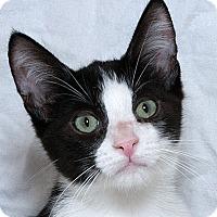 Adopt A Pet :: Petey W - Sacramento, CA
