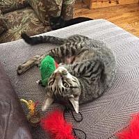 Adopt A Pet :: Doris C170119 - Eden Prairie, MN