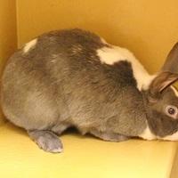 Adopt A Pet :: *FAIRY - Las Vegas, NV