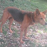 Adopt A Pet :: Sweet Sarah - House Springs, MO