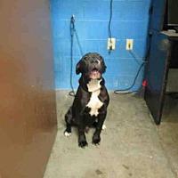 Adopt A Pet :: MALCOM - Olivette, MO