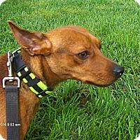 Adopt A Pet :: Wally - Jacksonville, FL