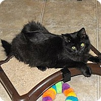 Adopt A Pet :: Batty Koda - Grand Rapids, MI