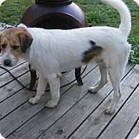 Adopt A Pet :: Oscar - Toledo, OH