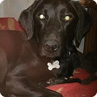 Adopt A Pet :: Winnie - Toledo, OH