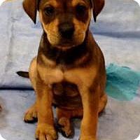 Adopt A Pet :: Lulu - Marlton, NJ