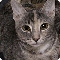 Adopt A Pet :: Cupcake - New York, NY