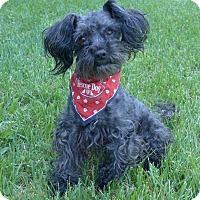 Adopt A Pet :: Asher - Mocksville, NC