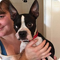 Adopt A Pet :: Merlyn - Weatherford, TX