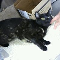Adopt A Pet :: Natasha - Miami Shores, FL