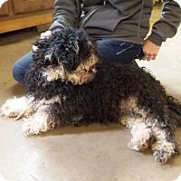 Adopt A Pet :: DIABLO - Medford, WI