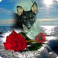 Adopt A Pet :: June - Crowley, LA