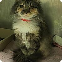 Adopt A Pet :: Caroline - New Albany, OH