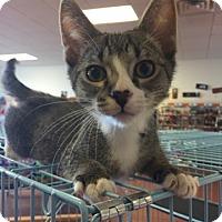 Adopt A Pet :: Ned - LaGrange Park, IL