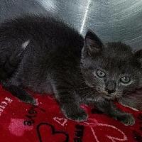 Adopt A Pet :: Nick - Port Clinton, OH