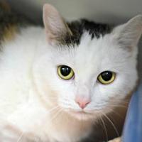 Adopt A Pet :: Kida Kitty - Annapolis, MD