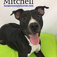Adopt A Pet :: Mitchell - Toledo, OH