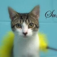 Adopt A Pet :: Susan - Middleburg, FL