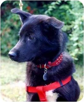 Border Collie/Spitz (Unknown Type, Medium) Mix Dog for adoption in Baldwin, New York - Jeanie