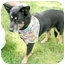 Photo 2 - Shepherd (Unknown Type) Mix Dog for adoption in Cincinnati, Ohio - Mya
