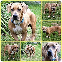 Adopt A Pet :: Frankie - Inverness, FL