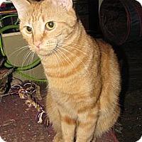 Adopt A Pet :: Moppsy - Edmond, OK