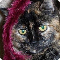 Domestic Shorthair Cat for adoption in Quilcene, Washington - Sophie