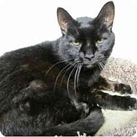 Adopt A Pet :: Cissy - Pascoag, RI