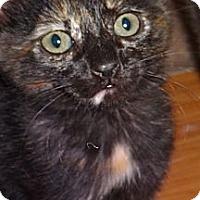 Adopt A Pet :: Truffle - Escondido, CA
