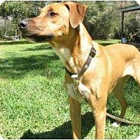 Adopt A Pet :: Bruiser - League City, TX