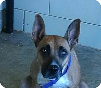Shepherd (Unknown Type) Mix Dog for adoption in Lewisville, Texas - Mommaz