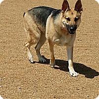 Adopt A Pet :: DAISY - Courtesy Listing - Broomfield, CO