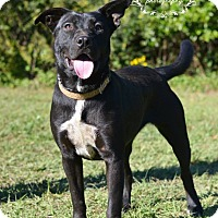 Adopt A Pet :: Hannah - Fort Valley, GA