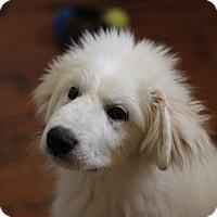 Adopt A Pet :: Winter - Austin, TX