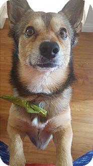 Corgi Mix Dog for adoption in Thousand Oaks, California - Lebron