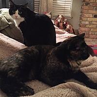 Adopt A Pet :: Sasha - Sacramento, CA