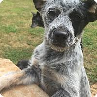 Adopt A Pet :: Luna - Smyrna, GA