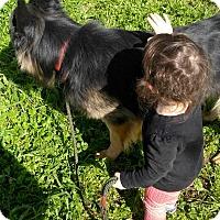 Adopt A Pet :: Dante family dog - Sacramento, CA