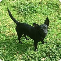 Adopt A Pet :: Taryn - North Brunswick, NJ