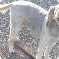 Adopt A Pet :: Sally - Woodland, CA