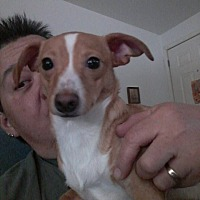 Adopt A Pet :: David Bowie - Tucson, AZ