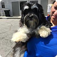 Adopt A Pet :: Nicole - Thousand Oaks, CA