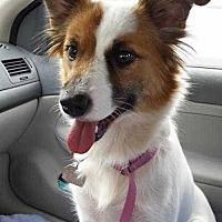 Adopt A Pet :: Dolly - Sarasota, FL