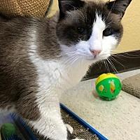 Adopt A Pet :: Nettie - Auburn, CA
